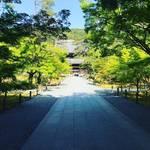 【2020京都風景】晩春に咲くシャクナゲと新緑の芽生え☆コロナ禍の閑散をよそに「南禅寺」