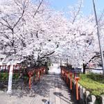 【京の写真旅】六孫王神社の春~おうちで京都旅行気分~
