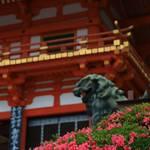 【京都花めぐり】美しい皐月と疫病退散の御朱印・茅の輪くぐり『八坂神社』【祇園】
