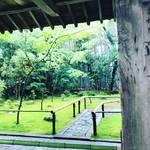 【京都お寺めぐり】梅雨シーズン☆苔&新緑の絶景スポット!拝観休止中の大徳寺塔頭「高桐院」