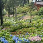 【京都観光】初夏の京都、色とりどりの紫陽花を見に行こう『三室戸寺』