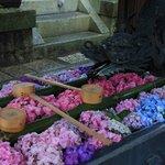 花手水と5000株の紫陽花に癒される「柳谷観音」あじさいウィーク【京都花めぐり】