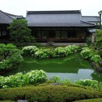 【特別拝観】半夏生と苔が美しい。雨が似合う庭園が見どころ「建仁寺両足院」