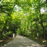 暑い日は清涼を求めて、世界遺産『下鴨神社』へ
