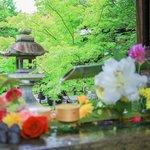 花に癒される、魅力いっぱいの東福寺塔頭『天得院』『勝林寺』【京都花めぐり】
