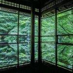 【癒しの庭園】今なお美しい緑の世界、青もみじの季「瑠璃光院」