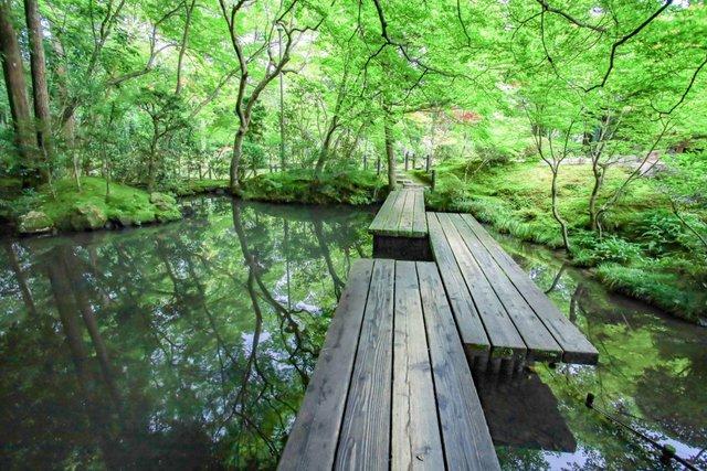 【京都青もみじ】見て撮って癒される美しい緑の庭園「南禅寺 天授庵」