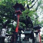 【京都神社めぐり】NHK大河ドラマで一躍有名に!伐採すると祟る御神木☆平清盛ゆかり「若一神社」