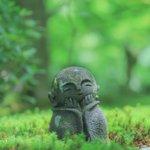 【京都青もみじ】青もみじと水琴窟に癒される『圓光寺』
