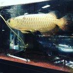 【京都伏見】観魚ならおまかせ!豊富な知識と経験で親切対応☆知る人ぞ知る名店「中村観魚園」
