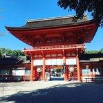 【2020京都紅葉最新】例年色づき進行スローの糺の森☆世界遺産「下鴨神社」