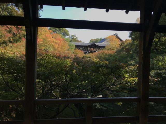 【2020紅葉最新】京都随一の名所!紅葉グラデーションの通天橋も例年より閑散「東福寺」