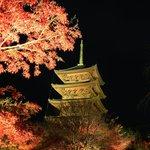 【紅葉ライトアップ】秋の絶景!境内ライトアップ開催中『東寺』
