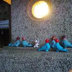 たくさんの可愛い鳩に出会える『三宅八幡宮』