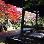 【2020京都紅葉最新】洛西の通称『花の寺』☆竹林奥の参道の穴場寺院「勝持寺」