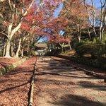 【2020京都紅葉最新】JR東海のCMにも登場した絶景の赤絨毯でおなじみ「毘沙門堂」