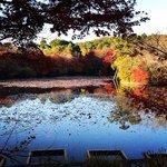 【2020京都紅葉最新】まさに見頃の枯山水石庭!回遊式庭園の絶景☆世界遺産「龍安寺」