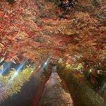 【京都紅葉】約350本!色とりどりの紅葉に包まれる『北野天満宮・もみじ苑』
