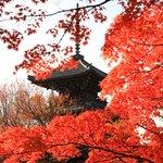 【京都紅葉2020】毎年紅い紅葉が楽しめる紅葉名所「真正極楽寺 真如堂」