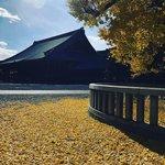 【2020京都紅葉】今シーズンラストの輝き☆名残りの黄金イチョウじゅうたん「西本願寺」