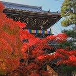 【京都紅葉2020】壮大な山門と紅葉、アフロ大仏様にもお会い出来ます♪「金戒光明寺」/隠れた紅葉の名所「栄摂院」