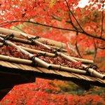 【京都紅葉2020】小倉百人一首の生誕の地と伝わる静かなる紅葉名所「厭離庵(えんりあん)」