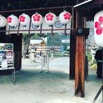 【京都初詣】京都屈指の桜の名所!寒桜開花&拝殿復興間近「平野神社」