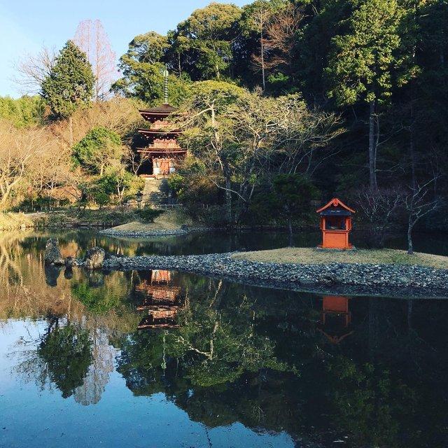 【秘境】仏像マニア&ネコ好き必訪!京都最南端の人里離れた穴場寺院「浄瑠璃寺」