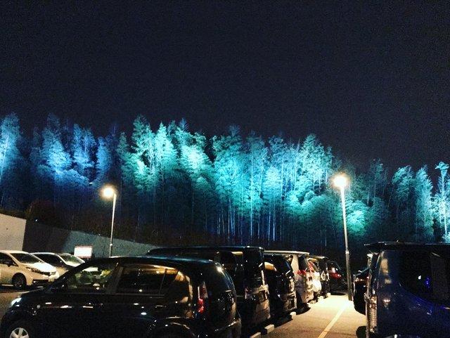 【京都癒し】オーロラ的竹林ライトアップ露天風呂&サウナロウリュ「竹取温泉 灯りの湯」