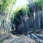 【京都史跡】登山感覚で訪れたい!京大桂キャンパス裏の幻の山城跡「峰ヶ堂城址」