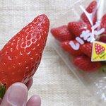 【京都南丹】「やまもとberryふぁ〜む」の大粒で甘くておいしい章姫