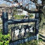 【2021京都花めぐり】観光名所の季節の花々開花情報☆南禅寺~哲学の道~法然院