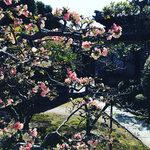 【京都ぶらり】学問の神様・菅原道真ゆかり『北野七保』のお堂も「成願寺」