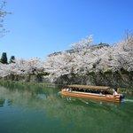 【京都桜2021】岡崎疏水と十石舟・蹴上周辺の桜【京の花めぐり】
