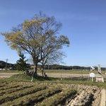 【京都ぶらり】稲作発祥地と伝わる水田史跡☆豊受大神ゆかり『清水戸』も「月の輪田」
