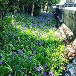 【京都の花】応仁の乱 勃発地!季節の花『一初』も見頃☆皇室ゆかり「上御霊神社」