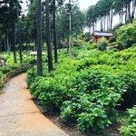 【京都の花】京都随一の『あじさい寺』6月開始予定ライトアップも準備中「三室戸寺」