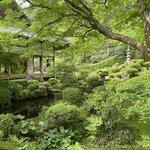 【京都観光】癒される♩今が見頃、美しい新緑の青もみじ『三千院』