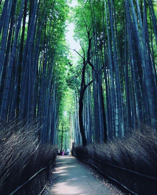【京都ぶらり】初夏の嵯峨・嵐山をパトロール☆渡月橋~竹林の小径~御髪神社
