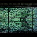 【京都青もみじ2021】緑の世界が美しい「瑠璃光院」春の拝観【人気スポット】