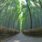 【京都嵐山】鳥のさえずりが響き渡る静かなる絶景「竹林の小径」【撮影スポット】