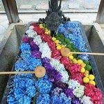 【あじさいウイーク】約5000株の紫陽花と花手水が楽しめる「柳谷観音楊谷寺」【京都花めぐり】