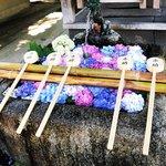 【京都の花】境内は3500本の紫陽花祭☆花手水必見のあじさい名所「藤森神社」
