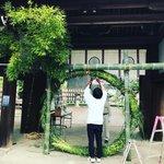 【京都ぶらり】珍しい夏越の祓『茅の輪』づくり風景も☆桜の名所「平野神社」