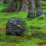 【京都花めぐり】〜初夏の三千院〜苔と紫陽花とわらべ地蔵