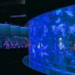 【京都】家族で♪ デートで♪ 涼しい『京都水族館』で楽しもう【夏休み】