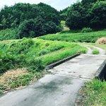 【京都ぶらり】大河ドラマ『麒麟がくる』で注目☆徳川家康の逃亡路「伊賀越えの道」