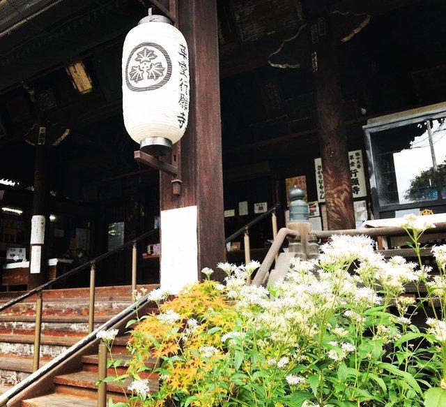 【京都の花】毎年恒例『藤袴祭』一部開催☆銭湯では今月26日藤袴湯も「革堂行願寺」