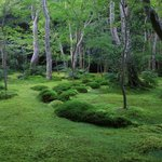 【嵐山嵯峨野】美しい緑の庭園とアサギマダラに癒される「祇王寺」【京都庭園めぐり】