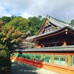 【2021京都紅葉最新】石段の絶景赤絨毯でおなじみ!疏水の秋桜は終盤「毘沙門堂」